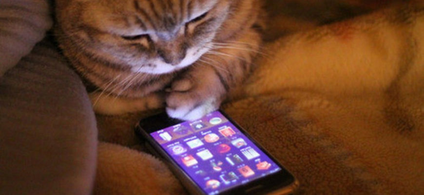 AppStore: Cat Scanner